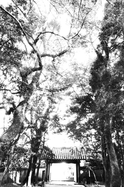 Gate in Kozan-Ji