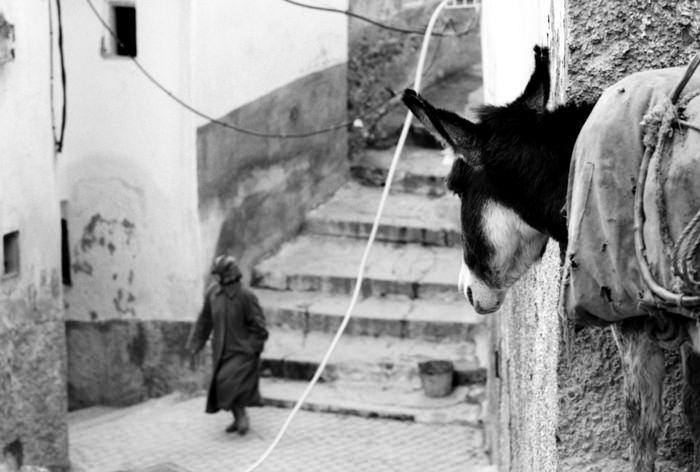 Donkey Was Watching (Morocco)