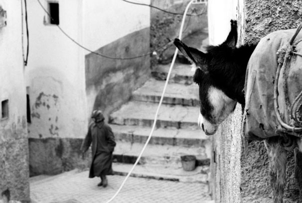 Donkey Was Watching (Morocco)