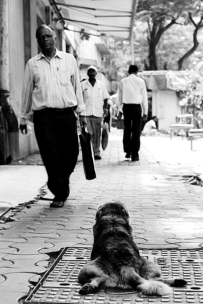Dog On Sidewalk @ India