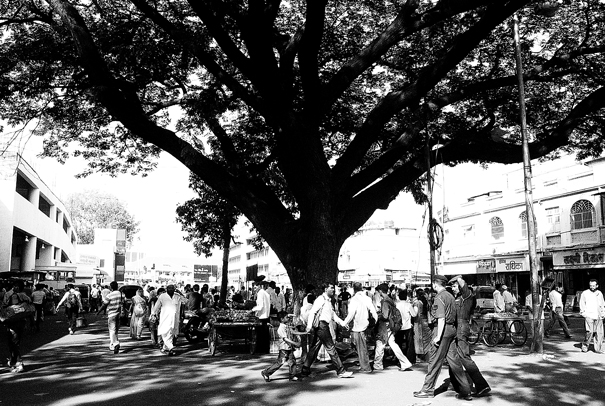 Under A Big Tree @ India