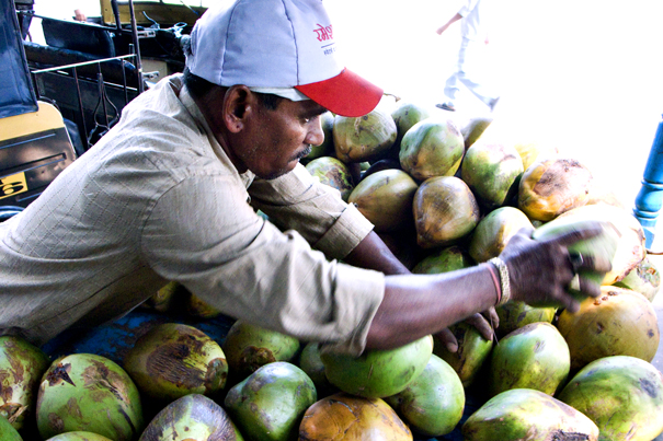 Heaps Of Coconuts (India)