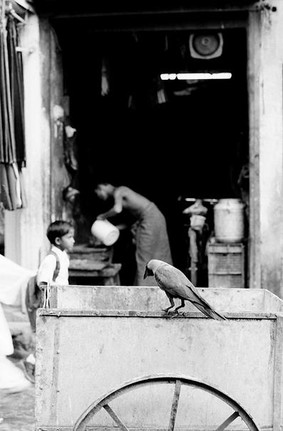Crow on cart