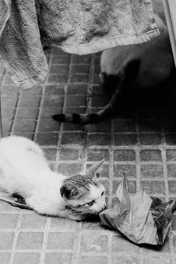 葉っぱの匂いを嗅ぐ猫