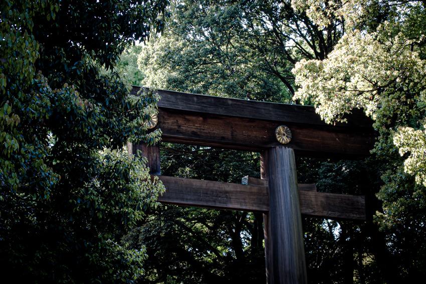 木立の中立つ明治神宮の鳥居