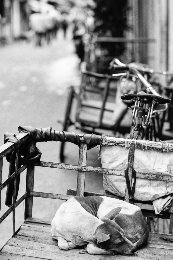 dog sleeping on the back of a bicycle