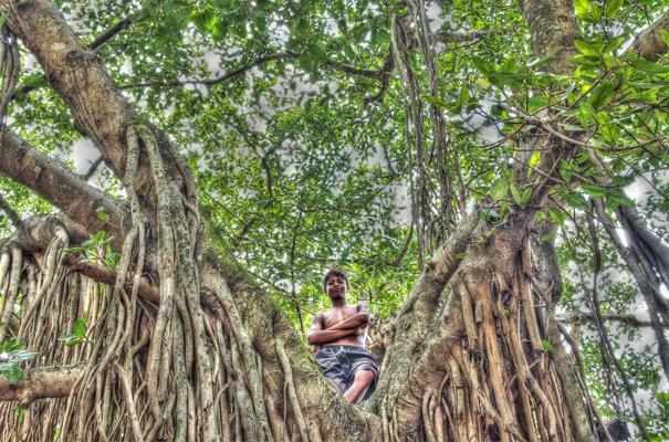 Boy On The Tree (India)