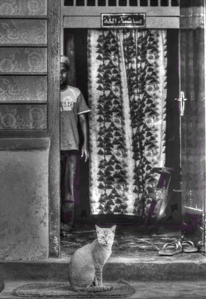 Cat At The Door (Sri Lanka)