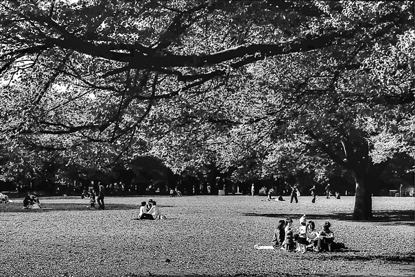 Picnic In The Yoyogi Park (Tokyo)