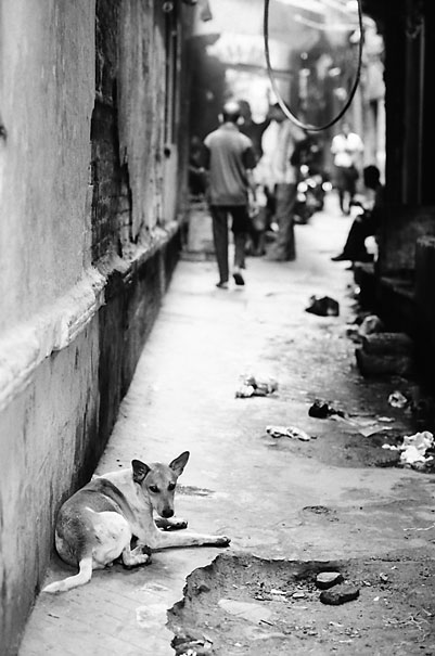 Dog lying in lane