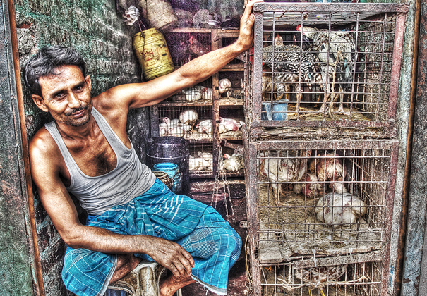Chickens In The Cage (India)