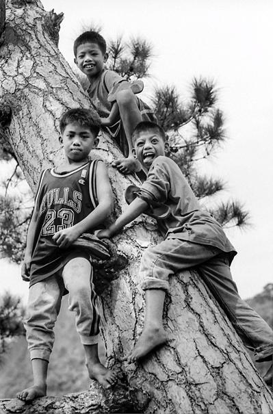 木にまとわりついた男の子たち
