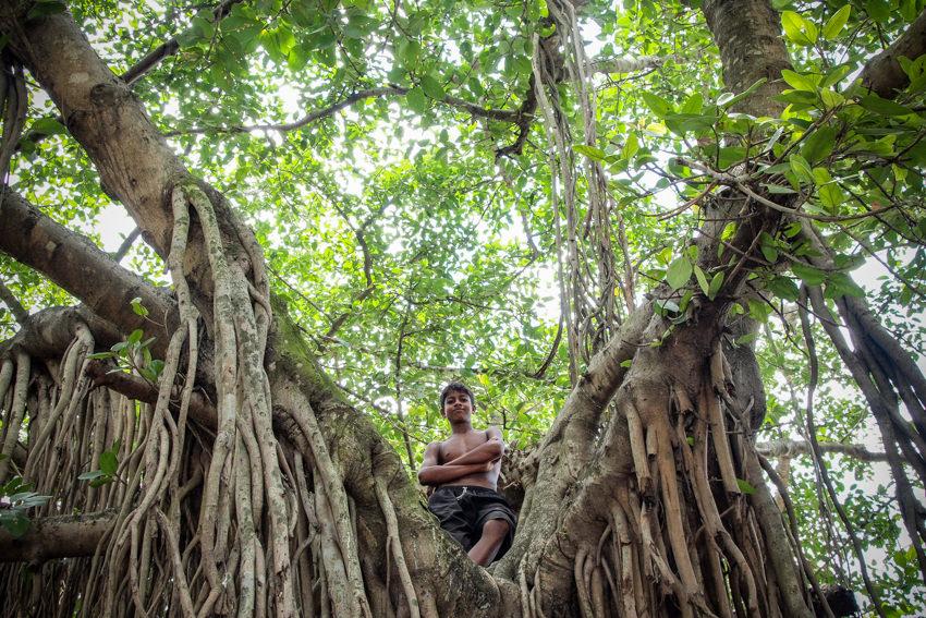 木の上に立つ男の子