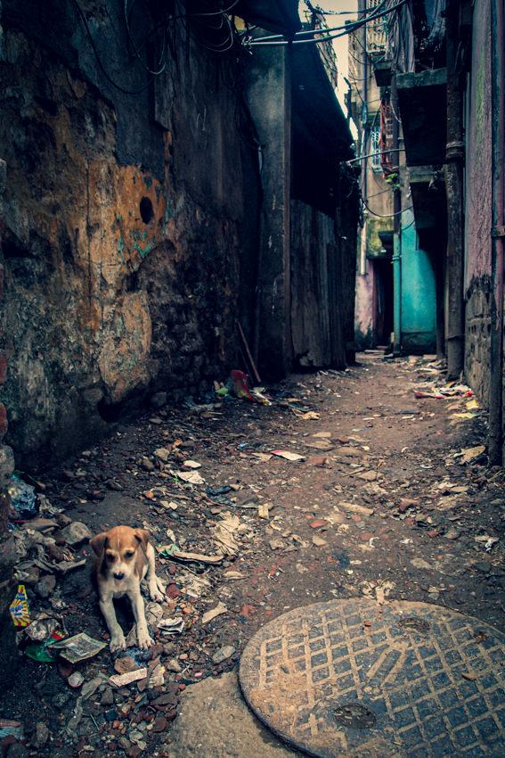 路地の子犬
