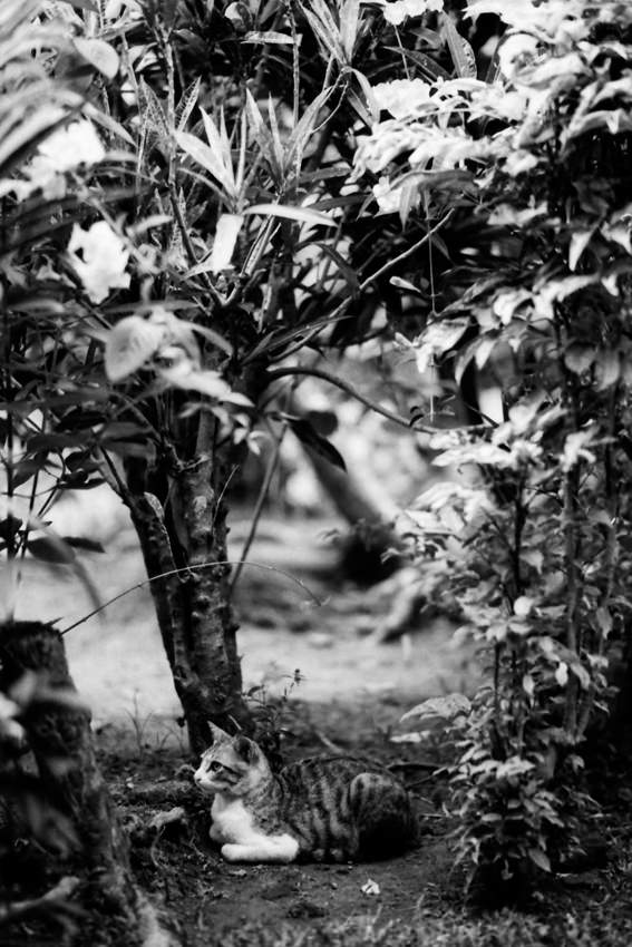 茂みの中の猫
