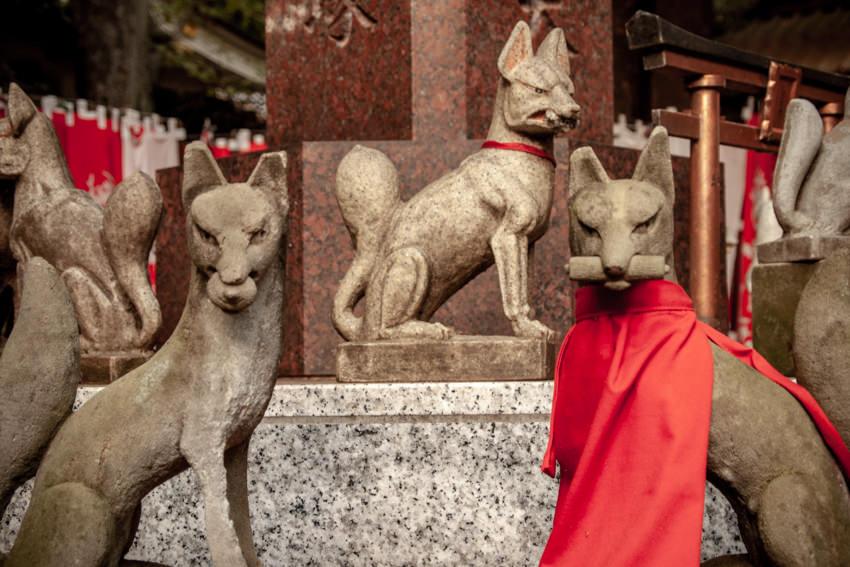 Foxes in Toyokawa-Inari