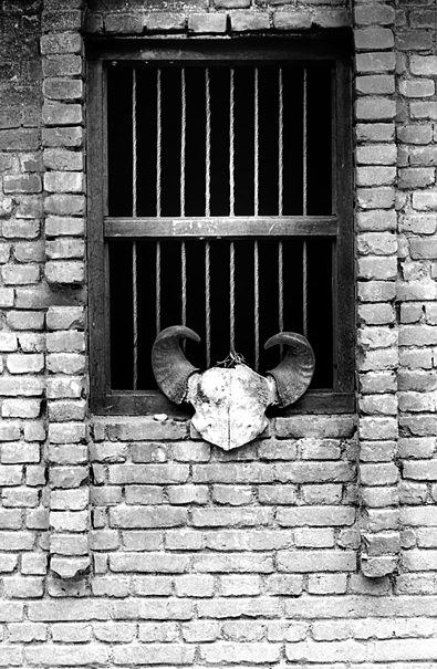 Skull bone by window