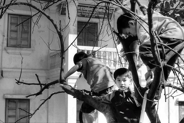 Three boys on tree