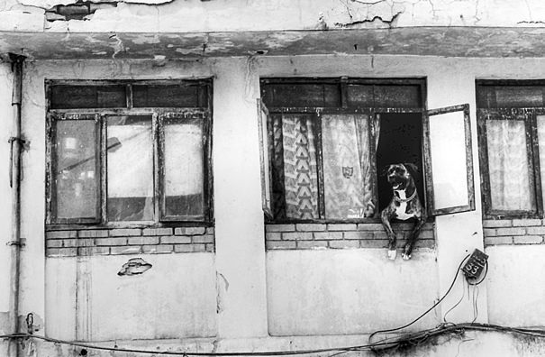 Black Dog Leaning Out The Window @ Nepal