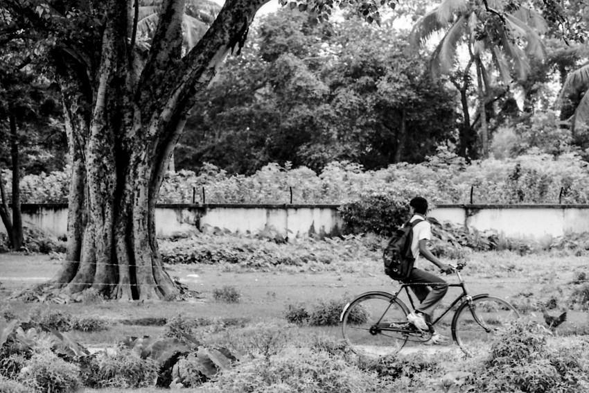 大木の横を通り過ぎる自転車
