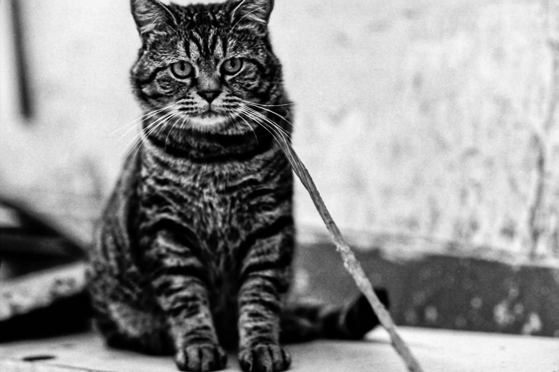 紐の付いた猫