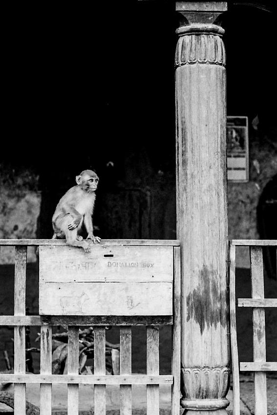 募金箱の上の猿