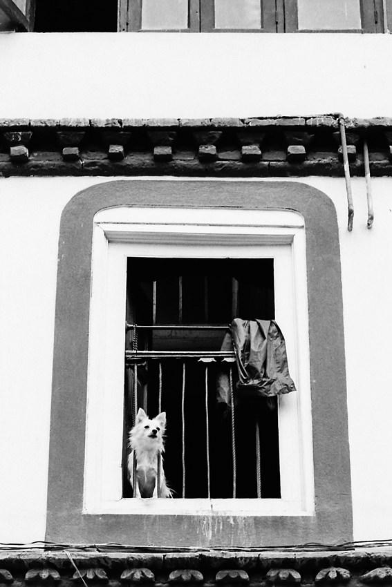 往来を眺める犬