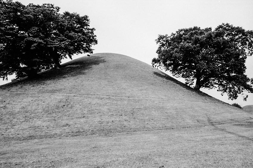 大陵苑の古墳に生える木