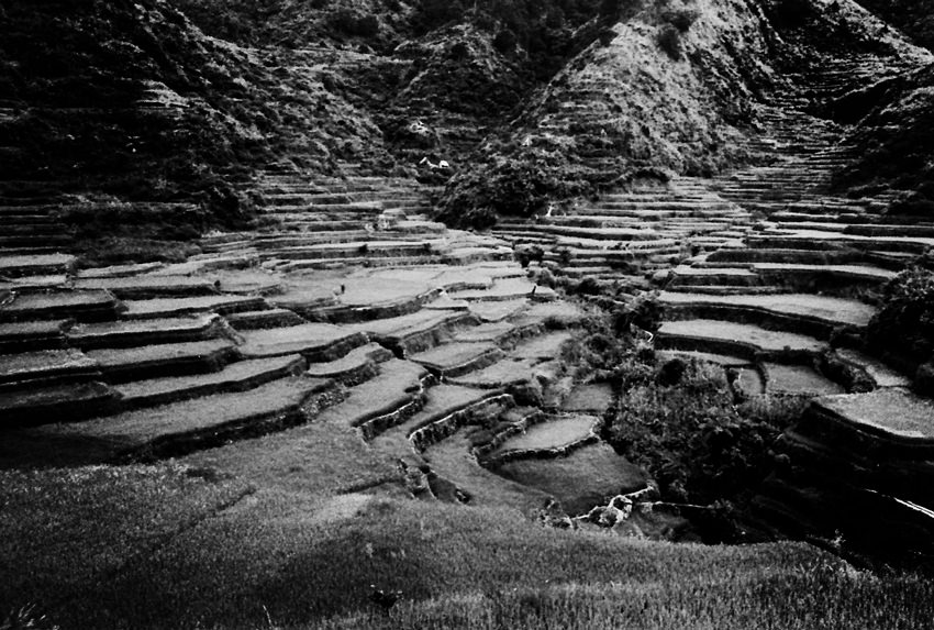 Rice terraces in Maligcong