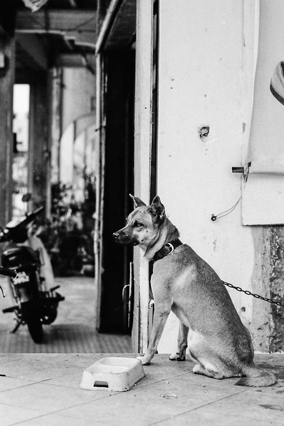 Dog sitting neatly