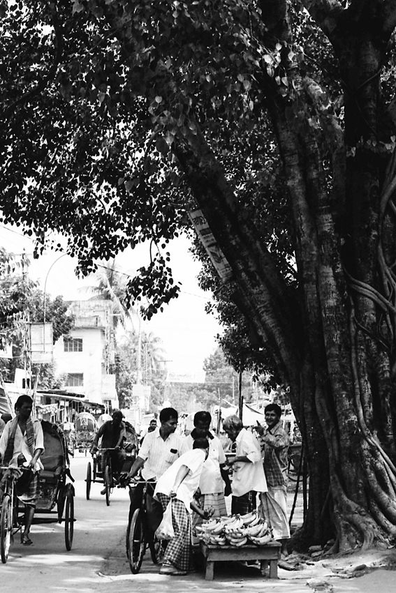 木陰のバナナ売り