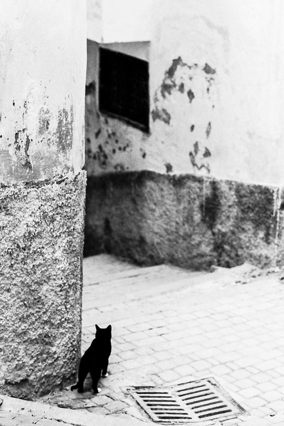 Cat surveying situation in street corner