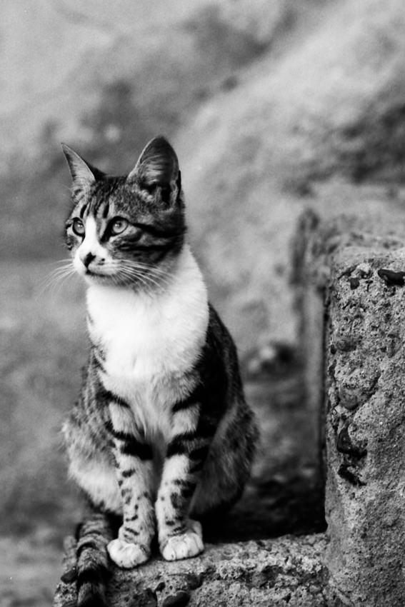 可愛らしい瞳の猫