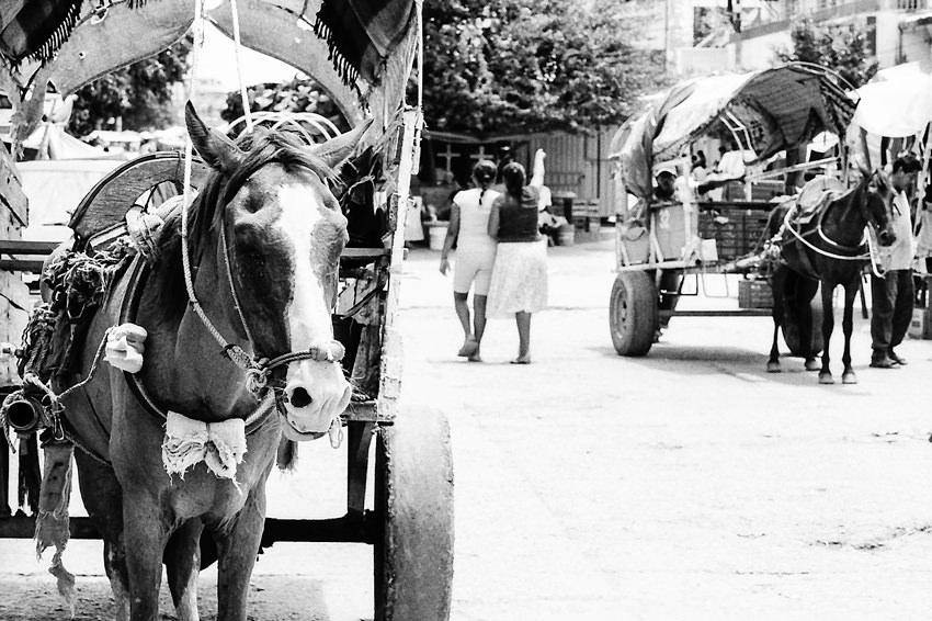道路脇に駐められた馬車