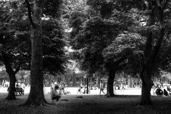 木の根元で読書