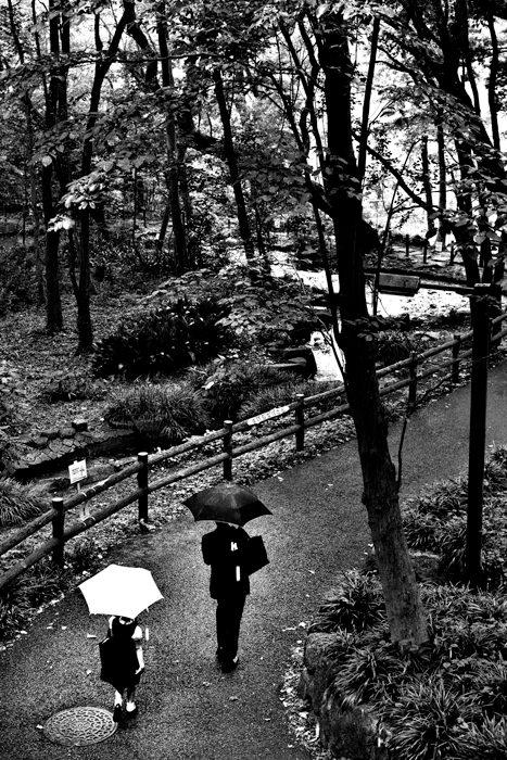 小径に二本の傘
