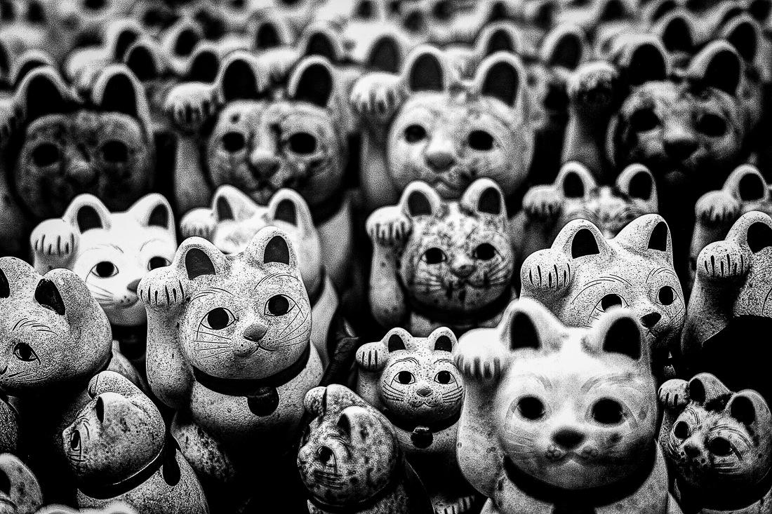Many welcoming cats in Gotoku-Ji