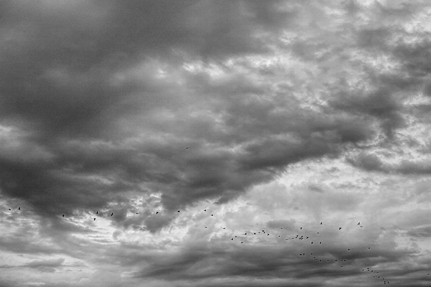 空を飛ぶ鳥の群れ
