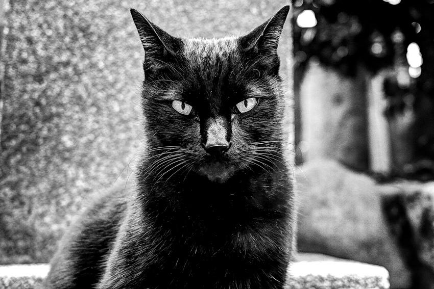 じっと見据える猫