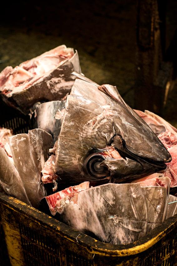 Heap of tuna head