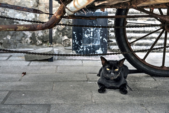 Black Cat Under The Wheels (Taiwan)