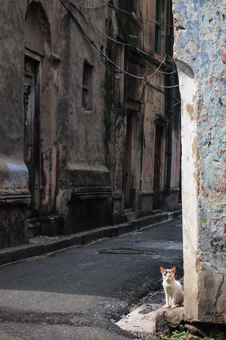Cat In A Corner Of The Street (India)