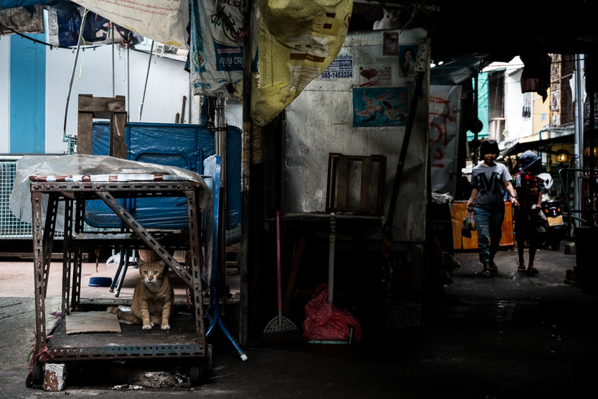 Cat in tattered rack