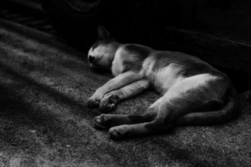 Cat entering a deep sleep by wayside