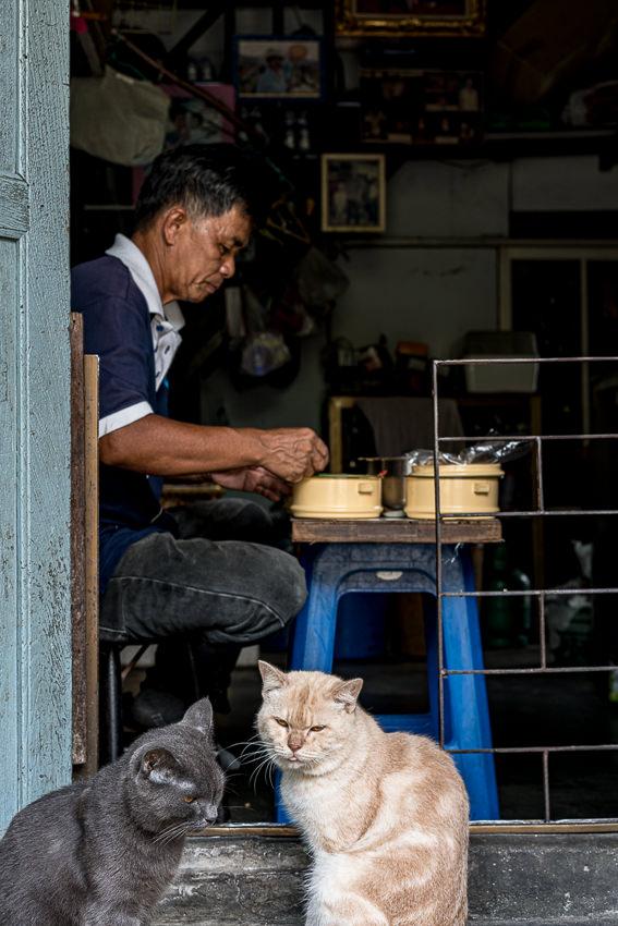 昼食中の男を見る二匹の猫