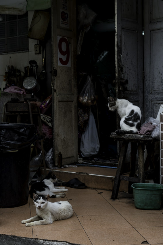 Three cats in front of door