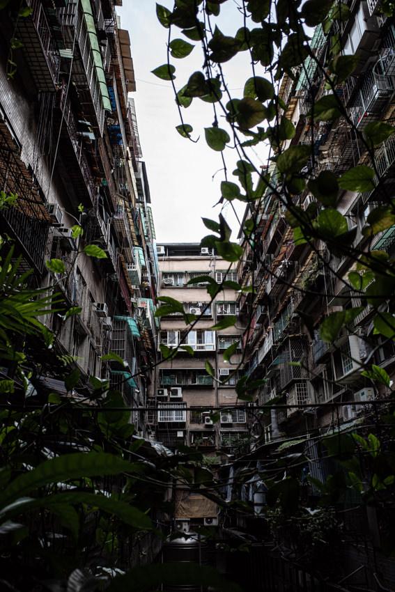 古びたマンションの光庭