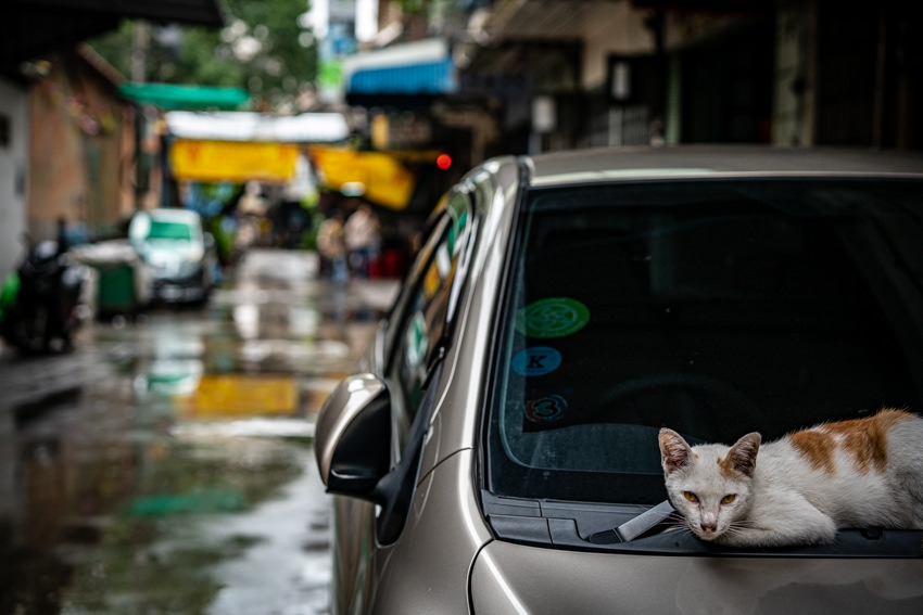 Cat relaxing on hood of car