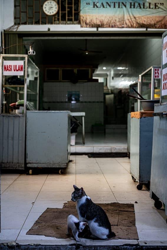 閑散とした食堂にいた猫の親子