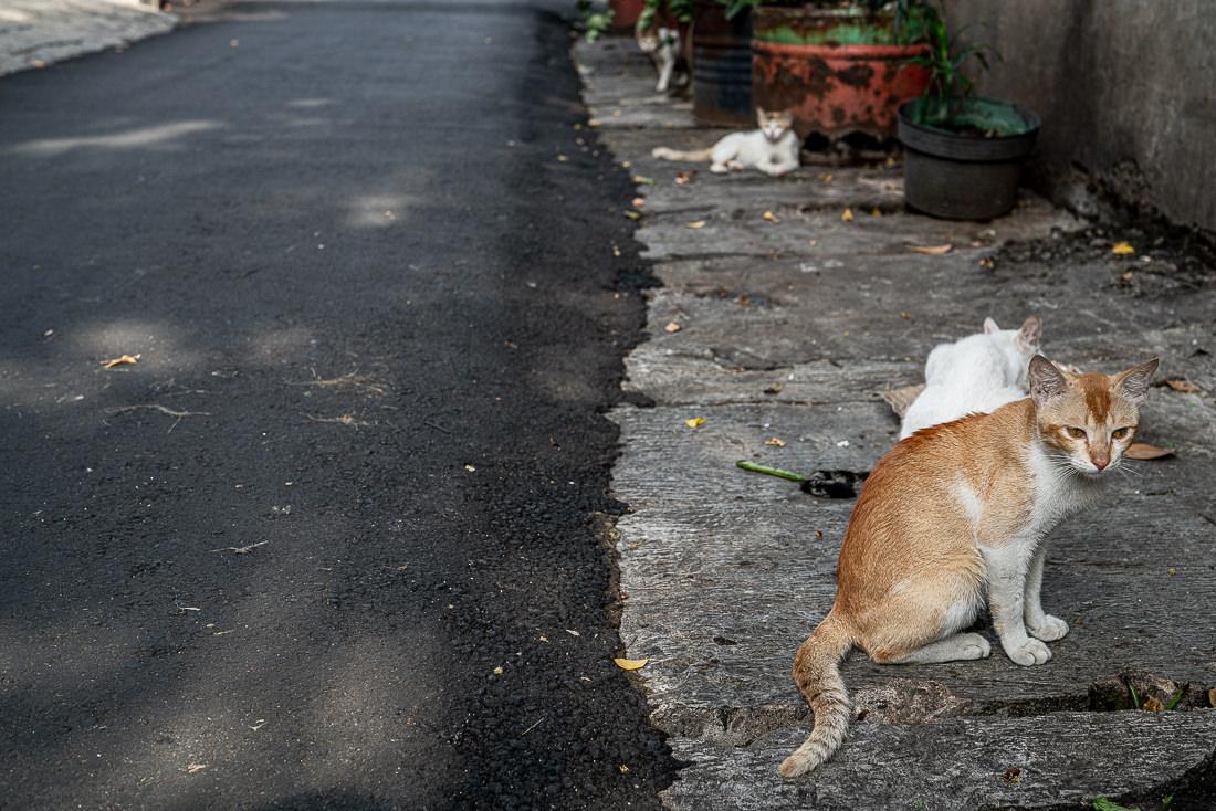 ジャカルタの道端にいた4匹の猫